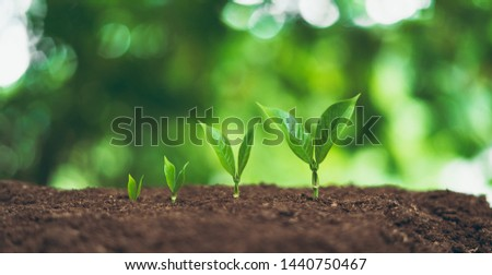 Tree plant and Growth In nature And beautiful bokeh #1440750467