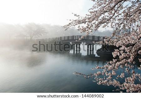 Cherry tree and bridge in the fog.