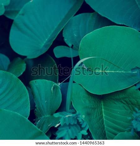 Tropical dark green leafs as background  #1440965363