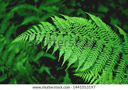 Go green. Green fern tree growing in summer. Fern with green leaves on natural background. Green is the color of spring and hope. Texture backdrop. Wild nature jungles forest. Royalty-Free Stock Photo #1441053197