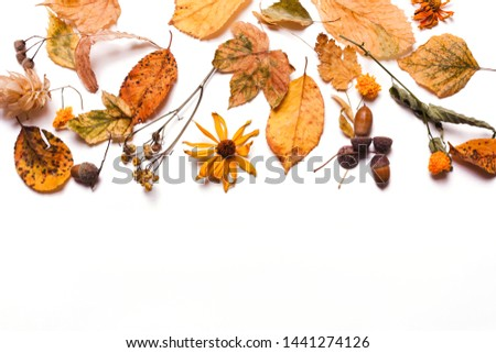 Background creative of yellow dry leaves, acorn, walnut, flowers. concept of autumn. Pastel colors. Top view, flat #1441274126