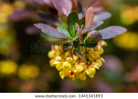 Branch with yellow blossom on blurred background at sunny day. Beautiful nature background. #1441341893