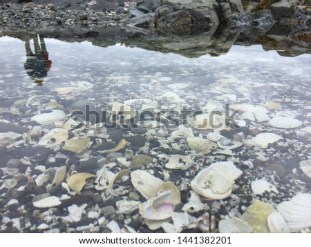 A shell filled beach in Haida Gwaii. The tide pools reflected the cloudy sprig day in Beautiful British Columbia. #1441382201