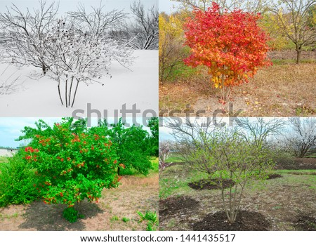 Seasons 4 seasons. Bush surrounded by trees in the garden #1441435517