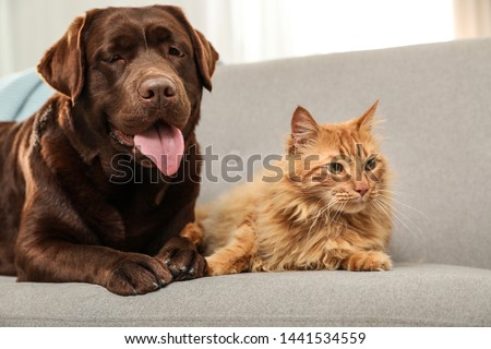 Cat and dog together on sofa indoors. Fluffy friends #1441534559