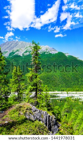 Mountain forest rock tree view. Mountain tree rock. Mountain tree scene. Mountain tree view #1441978031