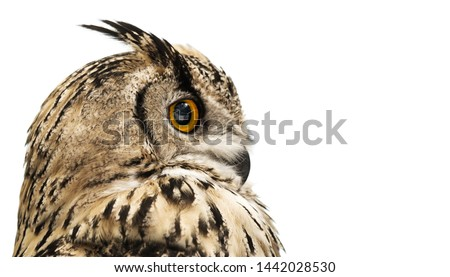 Head of adult horned owl in profile isolated on white background.