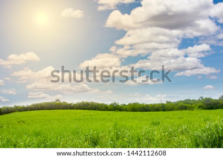 Green landscape,mountain and bright sky. #1442112608