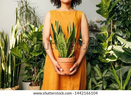 Unrecognizable florist woman holding a pot with sansevieria plant Royalty-Free Stock Photo #1442166104