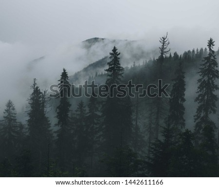 Fog in the forest. Tatras Mountains #1442611166