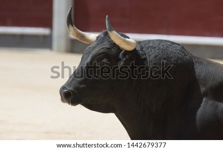 bull in spain in bullring  #1442679377
