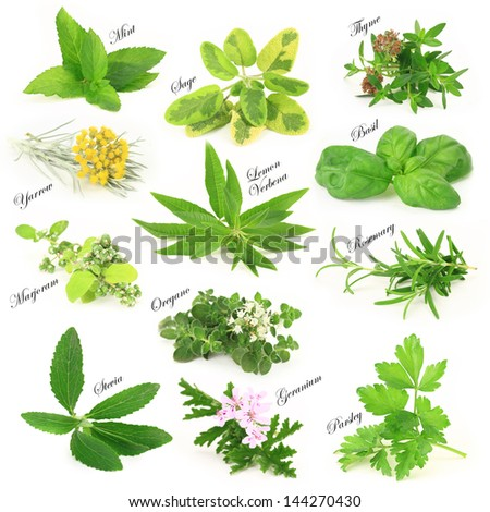 Herbs and spice isolated on white collection. Fresh and aromatic  #144270430