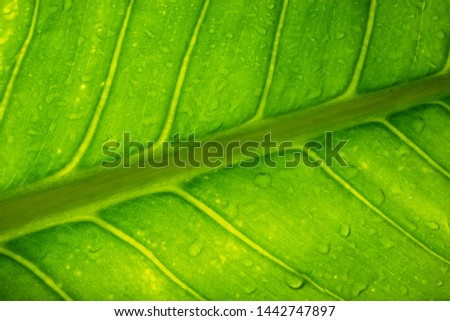 The green leaf background is used for refreshing. #1442747897