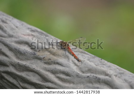 Autumn bug dragonfly in Japan #1442817938