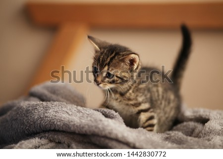 Cute little kitten on bed. Caring for pets, pet from the shelter for animals. #1442830772
