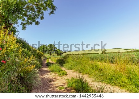 A country lane running between a hedgerow and a field of crops.  There is a hill in the distance and blue sky overhead. #1442955446