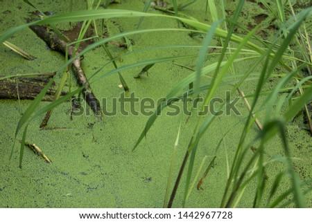 swamp landscape in Russia in summer #1442967728