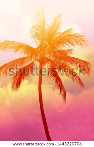 Photo background of exotic beautiful palm trees on a tropical island. An example for advertising travel or vacation at sea.
