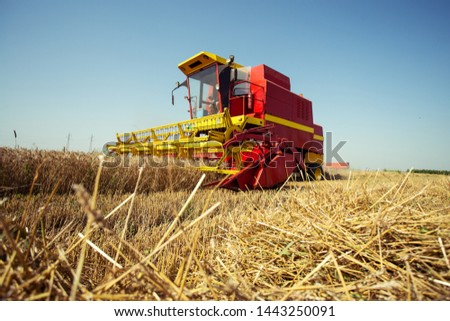 Combine harvester working on the wheat field #1443250091