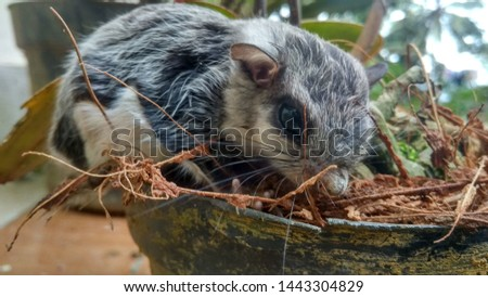 flying squirrel in the forest #1443304829