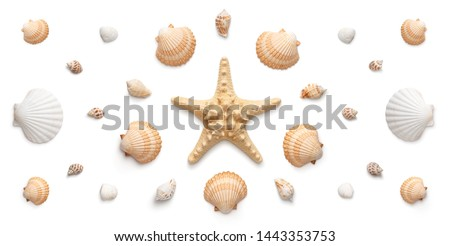 High angle, panoramic view of starfish and seashells isolated on white background  #1443353753