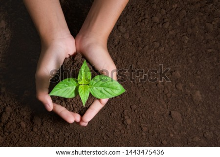 top view hand holding young tree on soil background for planting in garden #1443475436