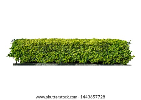 Green bush. Ornamental plant. The garden or the Park. Set of fences.  #1443657728