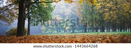 fall foliage covers ground in park, lonely tree aside, autumn trees background, panoramic photo
