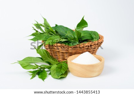 Gymnema inodorum leaf in the basket and sugar on white background, medicine herbal plant for diabetes treatment, function is control sugar level in blood #1443855413