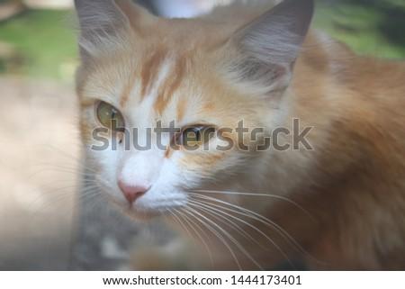 Beautiful cute cat cute cute #1444173401