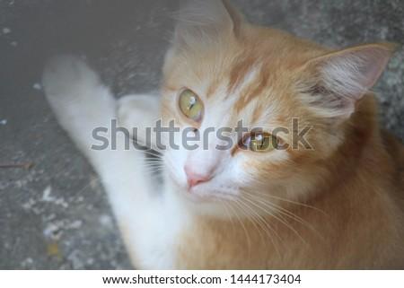 Beautiful cute cat cute cute #1444173404