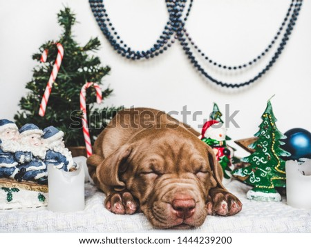 Young, charming puppy and bright Christmas decorations. Close-up, white isolated background. Studio photo. Concept of care, education, training and raising of animals #1444239200