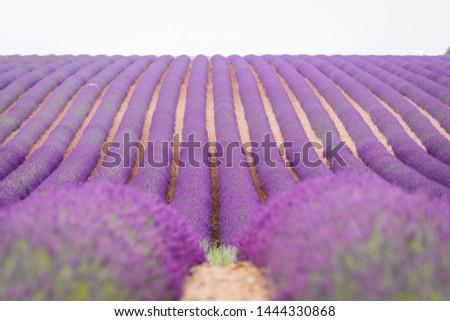 fields of lavender at plateau de valensole, France #1444330868