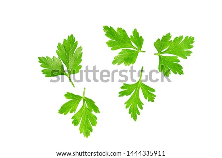 Green leaves of parsley isolated on white, top view. #1444335911