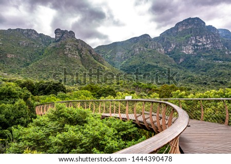 Kirstenbosch National Botanical Garden is acclaimed as one of the great botanic gardens of the world. Located in Cape Town, South Africa, the new tree top canopy walk is a tourist favorite. #1444390478