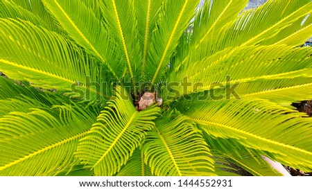 Background of palm leaves with green and yellow tones #1444552931