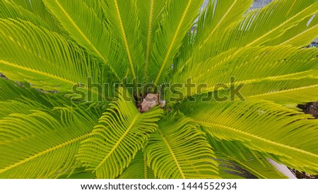 Background of palm leaves with green and yellow tones #1444552934
