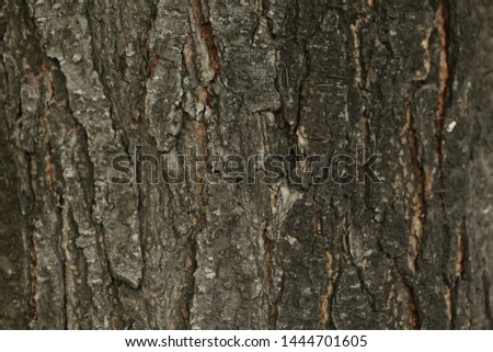 Embossed texture of the brown bark of a tree  #1444701605