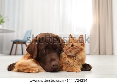 Cat and dog together on floor indoors. Fluffy friends #1444724234