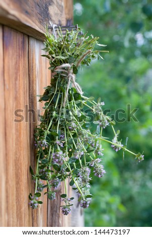 Freshly harvested thyme hanging and drying #144473197