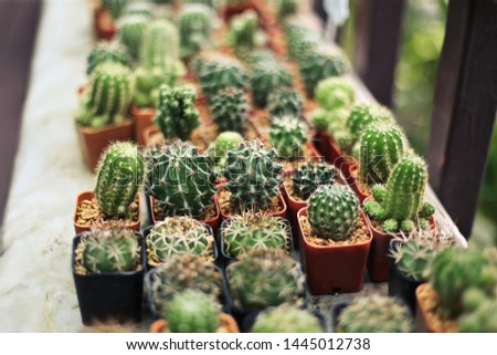 Cactus In many small pots placed in the garden #1445012738