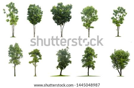 Set of tree isolated on white #1445048987