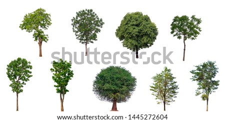 The collection set of trees Isolated on a white background, large images are suitable for all types of art work and print. #1445272604