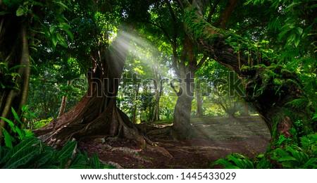 Southeast Asian rainforest with deep jungle #1445433029