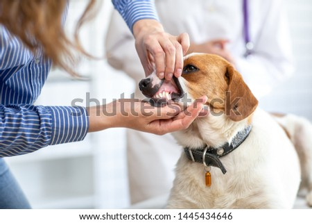 The owner of the dog shows the veterinarian the pet's teeth. Blurred background of veterinary clinic. #1445434646
