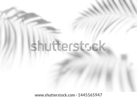 Shadows from the leaves of tropical trees on a white wall #1445565947