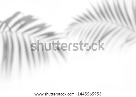 Shadows from the leaves of tropical trees on a white wall #1445565953