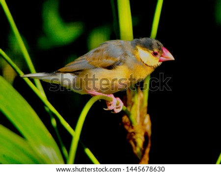 a small finch in the garden #1445678630