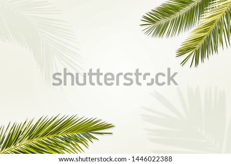 Summer green leaves of coconut palm and shadow. Free space for your decoration and gray background.  #1446022388