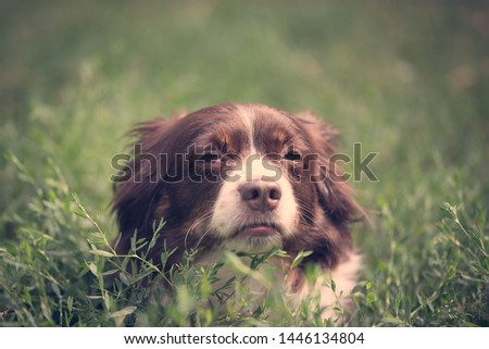 Sick dog resting in the green grass #1446134804
